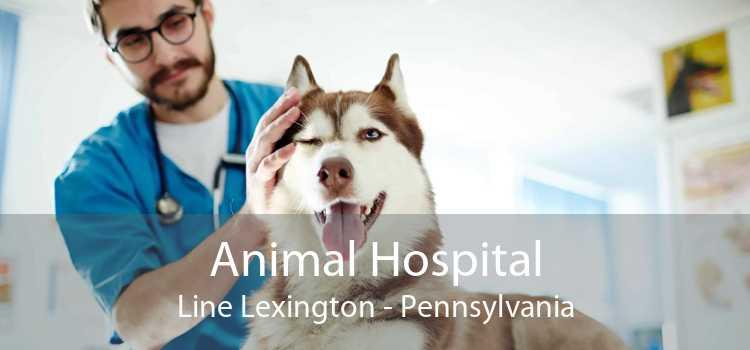 Animal Hospital Line Lexington - Pennsylvania