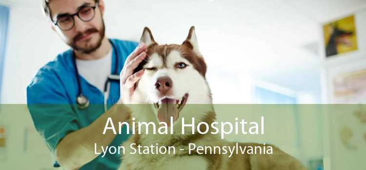 Animal Hospital Lyon Station - Pennsylvania