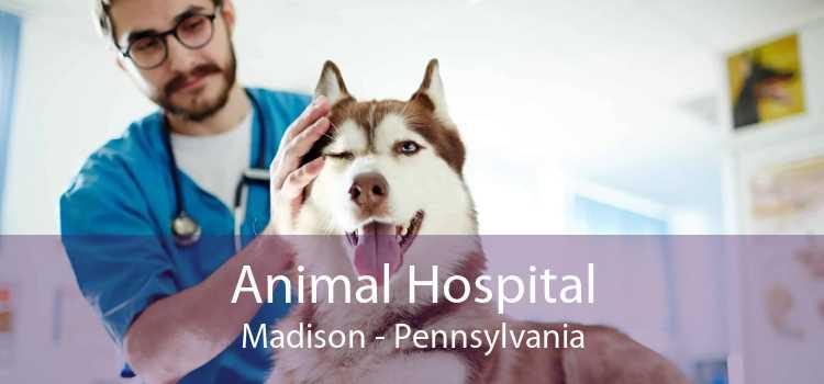 Animal Hospital Madison - Pennsylvania