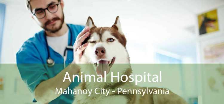 Animal Hospital Mahanoy City - Pennsylvania
