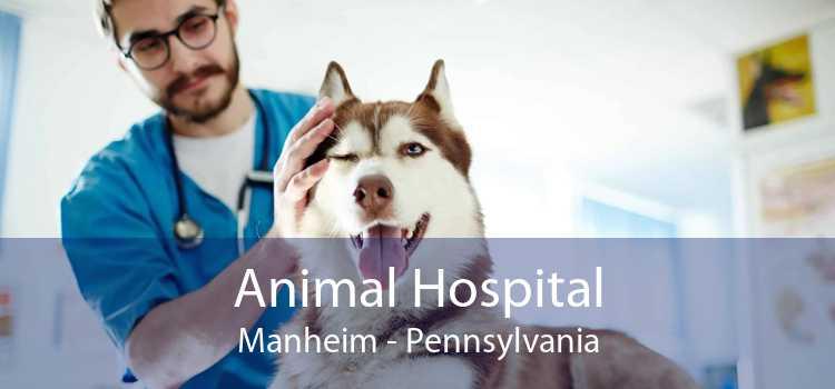 Animal Hospital Manheim - Pennsylvania