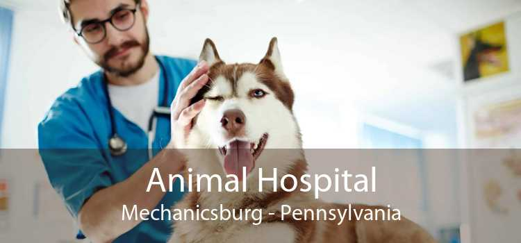 Animal Hospital Mechanicsburg - Pennsylvania