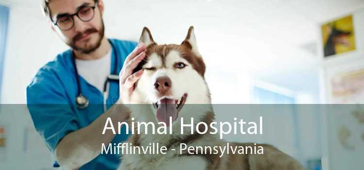Animal Hospital Mifflinville - Pennsylvania