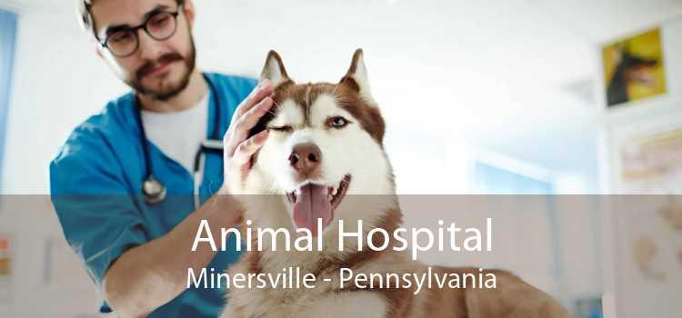 Animal Hospital Minersville - Pennsylvania