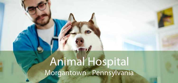 Animal Hospital Morgantown - Pennsylvania