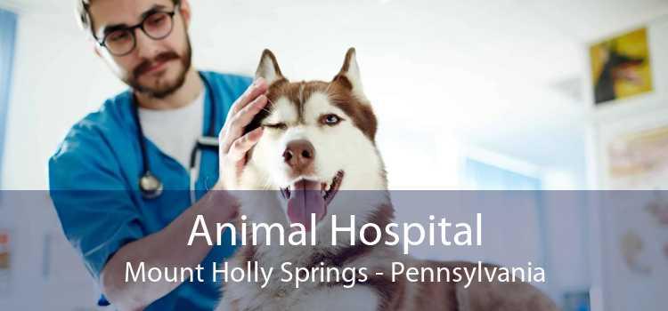 Animal Hospital Mount Holly Springs - Pennsylvania
