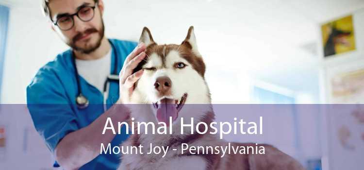 Animal Hospital Mount Joy - Pennsylvania