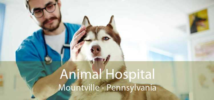 Animal Hospital Mountville - Pennsylvania