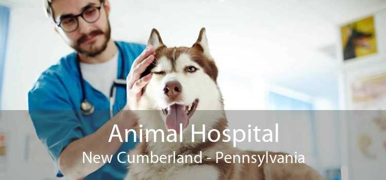 Animal Hospital New Cumberland - Pennsylvania