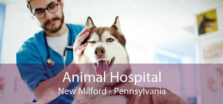 Animal Hospital New Milford - Pennsylvania