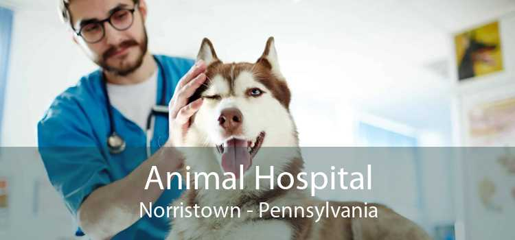 Animal Hospital Norristown - Pennsylvania