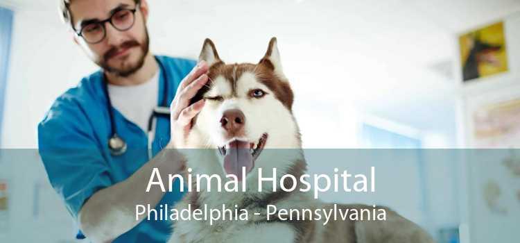 Animal Hospital Philadelphia - Pennsylvania