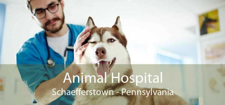 Animal Hospital Schaefferstown - Pennsylvania