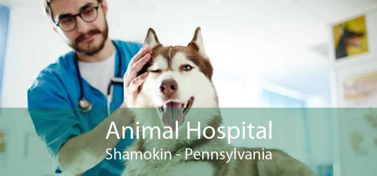 Animal Hospital Shamokin - Pennsylvania