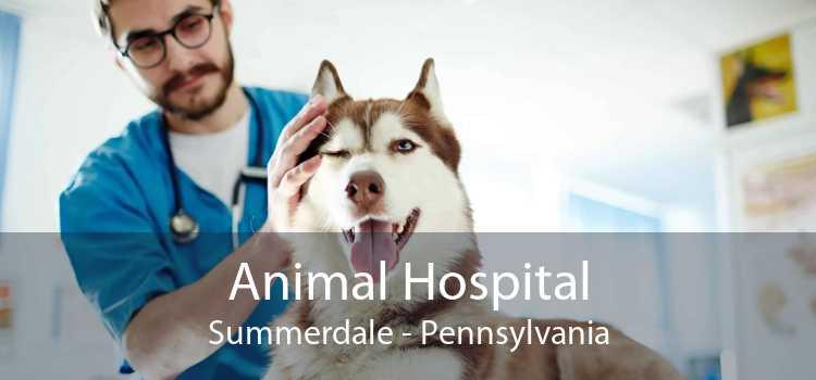 Animal Hospital Summerdale - Pennsylvania