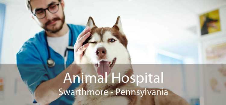 Animal Hospital Swarthmore - Pennsylvania