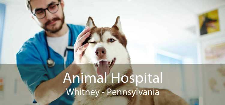Animal Hospital Whitney - Pennsylvania