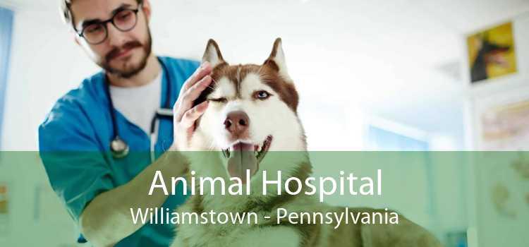Animal Hospital Williamstown - Pennsylvania
