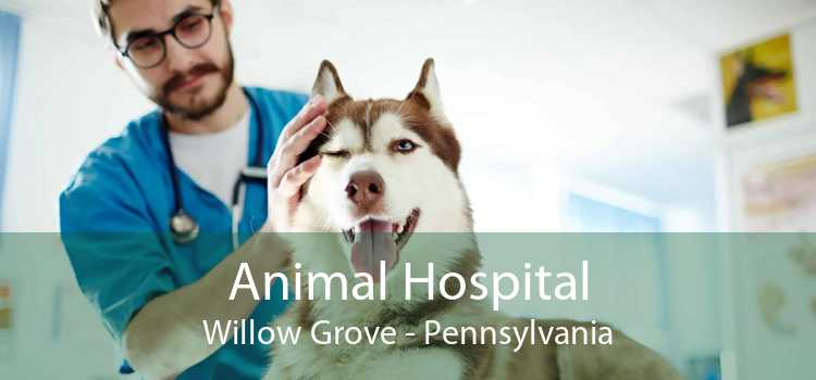 Animal Hospital Willow Grove - Pennsylvania