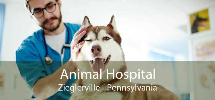 Animal Hospital Zieglerville - Pennsylvania