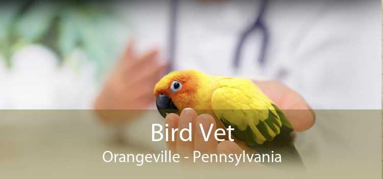 Bird Vet Orangeville - Pennsylvania