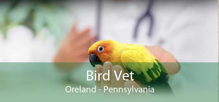 Bird Vet Oreland - Pennsylvania