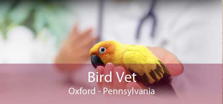 Bird Vet Oxford - Pennsylvania