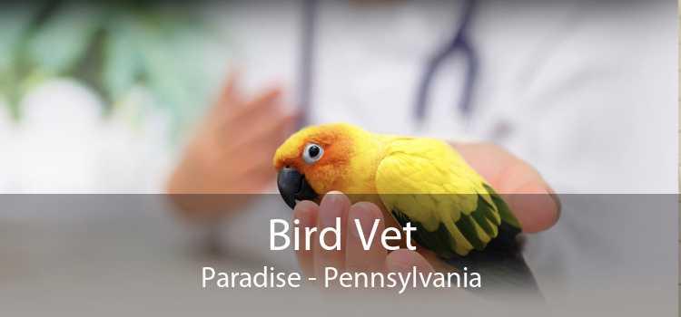 Bird Vet Paradise - Pennsylvania
