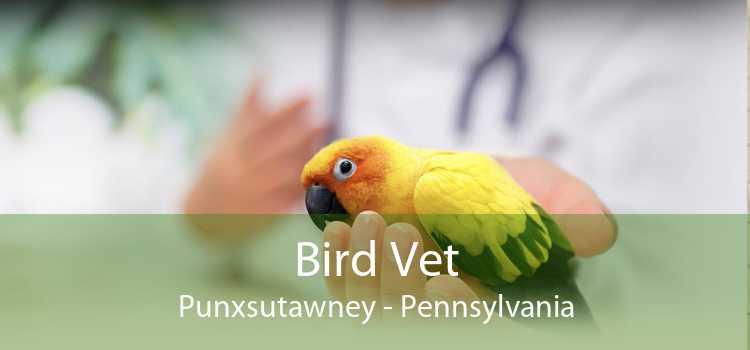 Bird Vet Punxsutawney - Pennsylvania