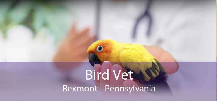 Bird Vet Rexmont - Pennsylvania
