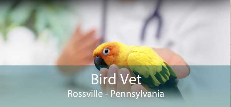 Bird Vet Rossville - Pennsylvania
