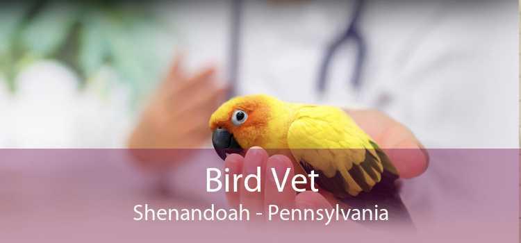 Bird Vet Shenandoah - Pennsylvania