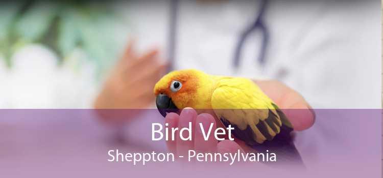 Bird Vet Sheppton - Pennsylvania