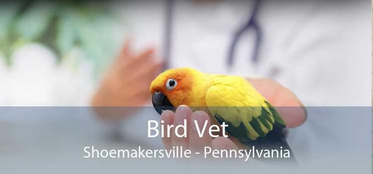Bird Vet Shoemakersville - Pennsylvania