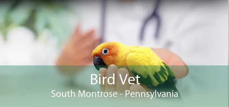 Bird Vet South Montrose - Pennsylvania