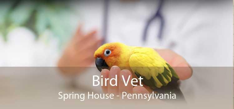 Bird Vet Spring House - Pennsylvania