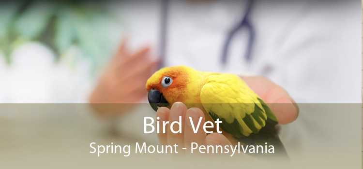 Bird Vet Spring Mount - Pennsylvania
