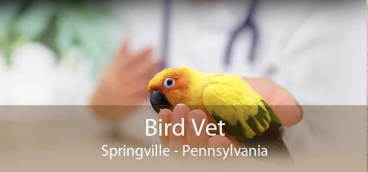 Bird Vet Springville - Pennsylvania