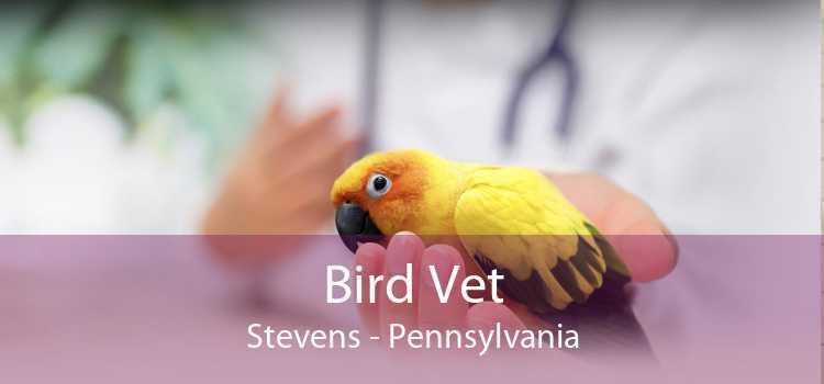 Bird Vet Stevens - Pennsylvania