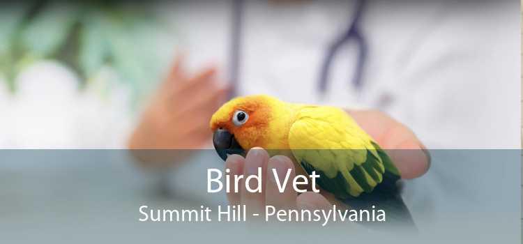 Bird Vet Summit Hill - Pennsylvania