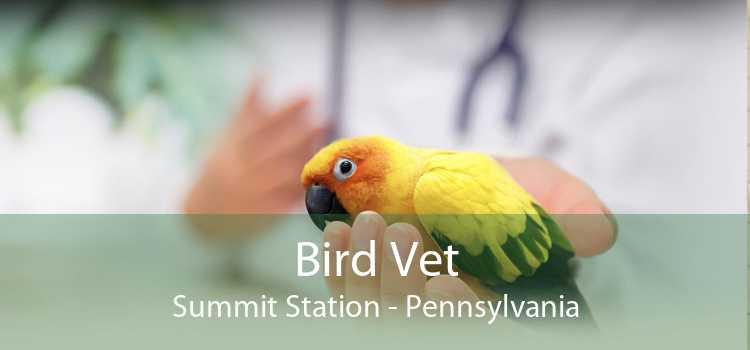 Bird Vet Summit Station - Pennsylvania