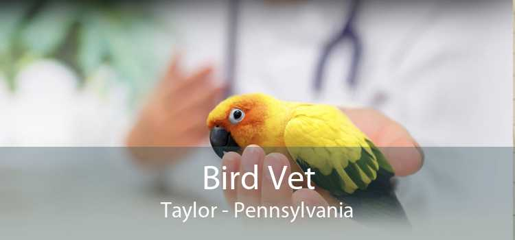 Bird Vet Taylor - Pennsylvania