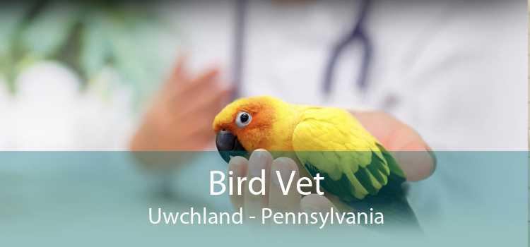 Bird Vet Uwchland - Pennsylvania