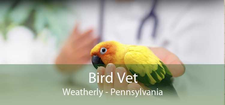 Bird Vet Weatherly - Pennsylvania