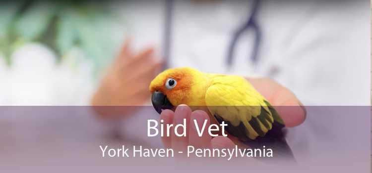 Bird Vet York Haven - Pennsylvania