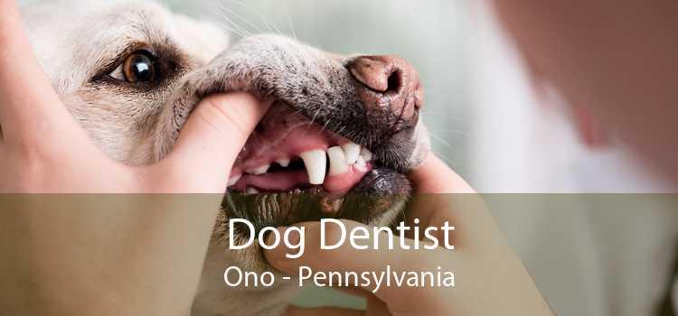 Dog Dentist Ono - Pennsylvania