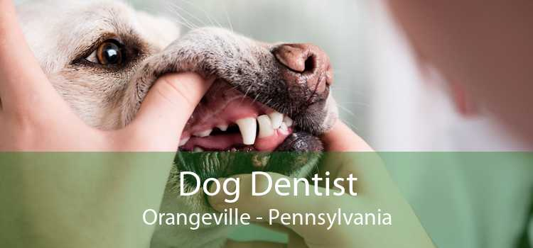 Dog Dentist Orangeville - Pennsylvania