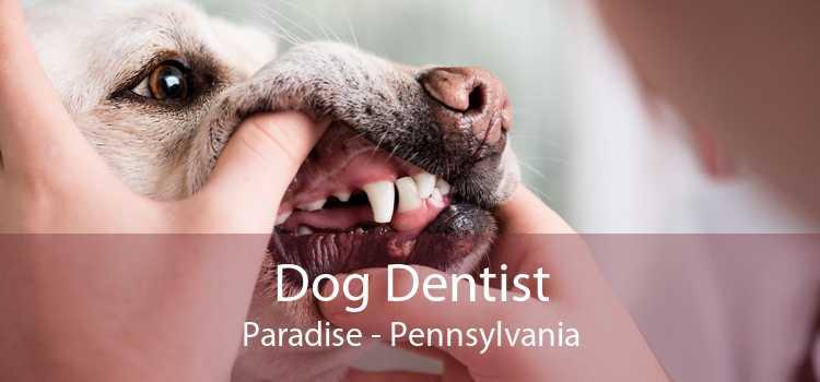 Dog Dentist Paradise - Pennsylvania