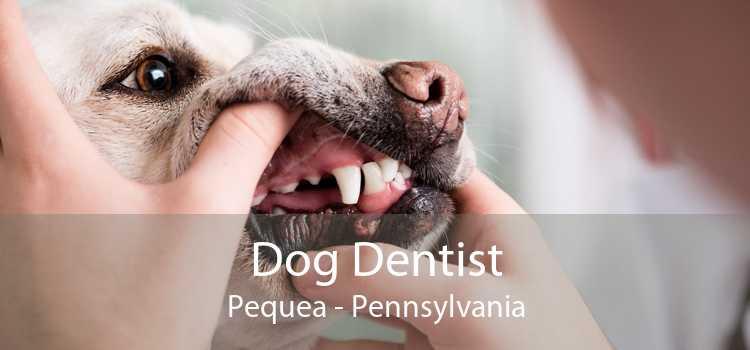 Dog Dentist Pequea - Pennsylvania