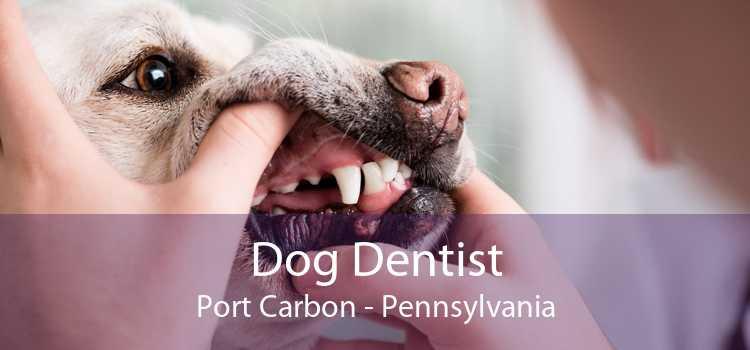 Dog Dentist Port Carbon - Pennsylvania